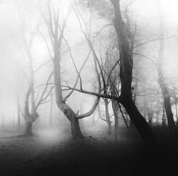 Apa itu Fobia Kabut?
