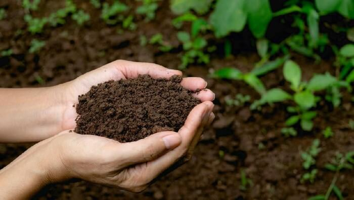 Ngidam Makan Tanah
